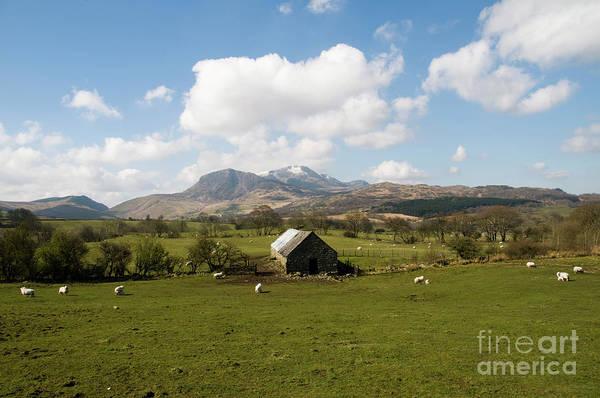 Photograph - Spring Lambs And Cadair Idris, Wales Uk by Keith Morris