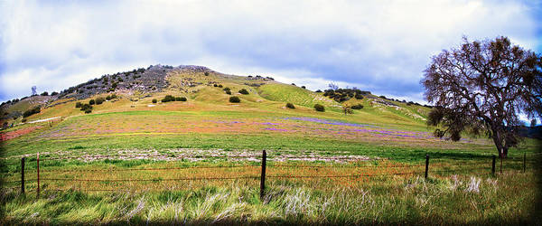 Photograph - Spring Landscape Panorama by Lynn Bauer