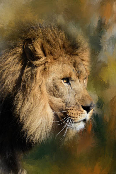 Photograph - Spring Lion 2 by Jai Johnson