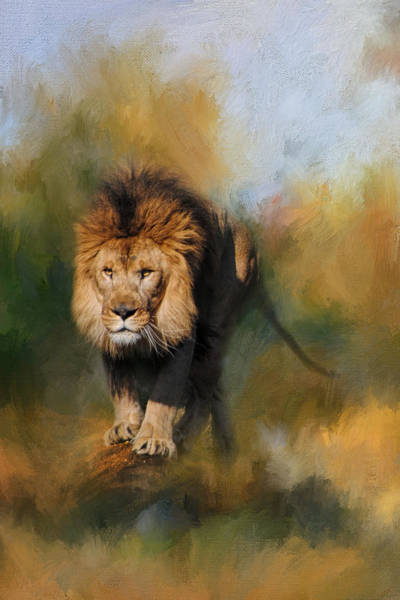 Photograph - Spring Lion by Jai Johnson
