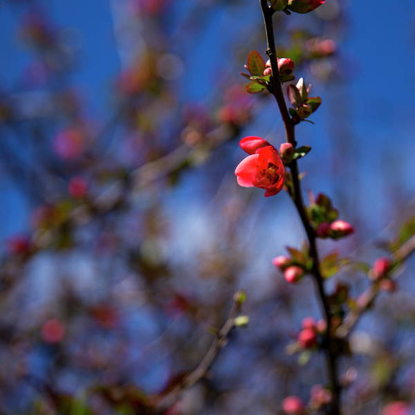 Photograph - Spring by Lora Lee Chapman