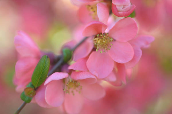 Photograph - Spring Love by Jenny Rainbow