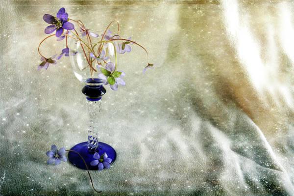 Photograph - Spring Loveliness by Randi Grace Nilsberg