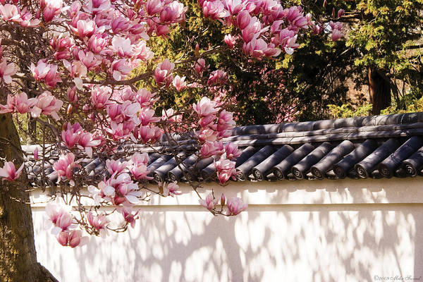 Photograph - Spring - Magnolia by Mike Savad
