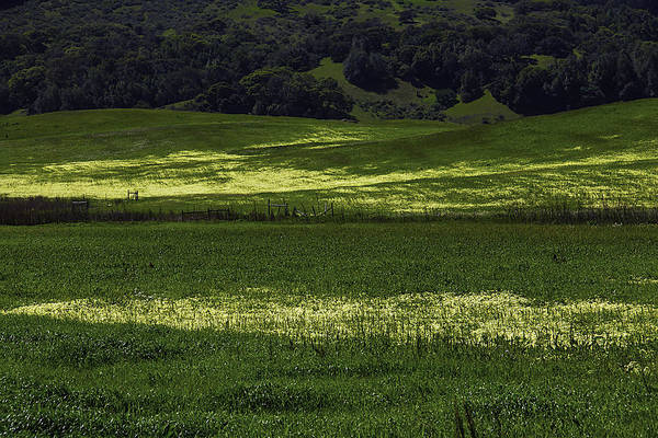 Hillside Photograph - Spring Meadows Of Wildflowers by Garry Gay