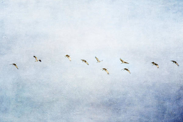 Photograph - Spring Migration 2 - Textured by Kathy Adams Clark