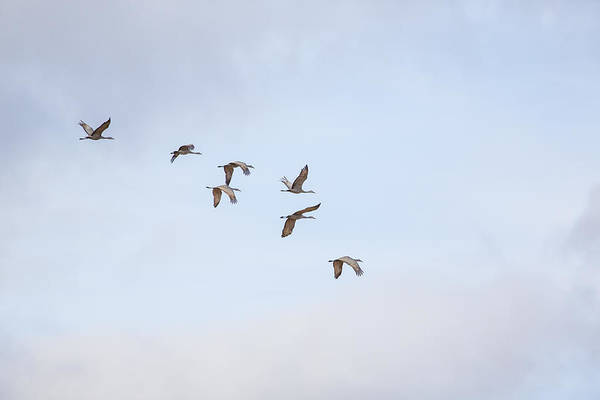 Photograph - Spring Migration by Kathy Adams Clark