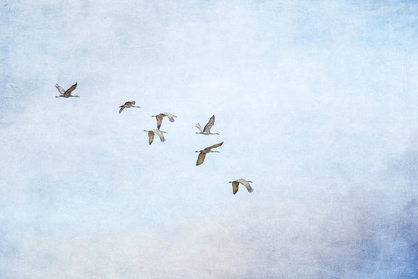 Photograph - Spring Migration - Textured by Kathy Adams Clark