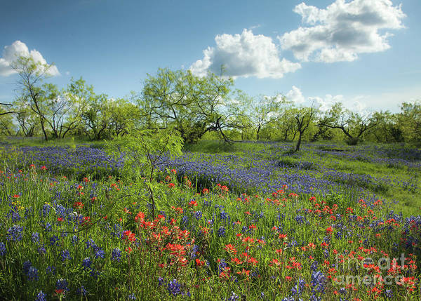 Wall Art - Photograph - Spring Morning by Iris Greenwell