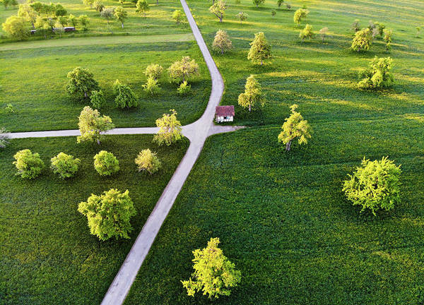 Photograph - Spring Morning With Trees And Green Meadow by Matthias Hauser