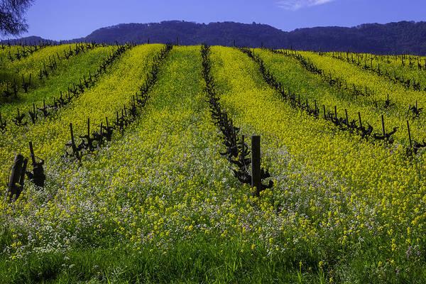 Wall Art - Photograph - Spring Mustard Field by Garry Gay