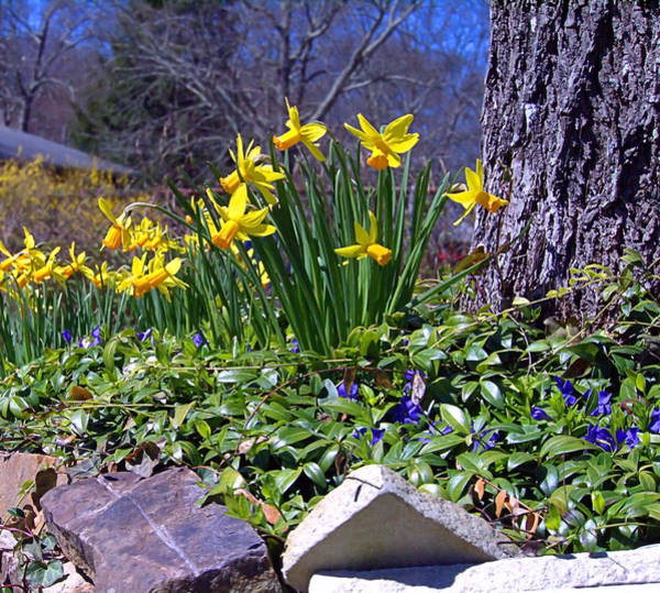 Photograph - Spring by  Newwwman
