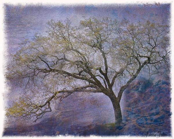 Oak Digital Art - Spring Oak by Patricia Stalter