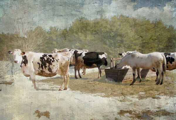 Photograph - Spring On The Farm  by Betty  Pauwels