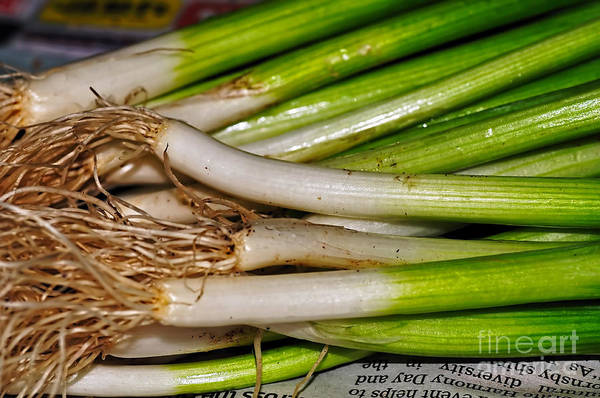 Scallion Photograph - Spring Onions by Kaye Menner