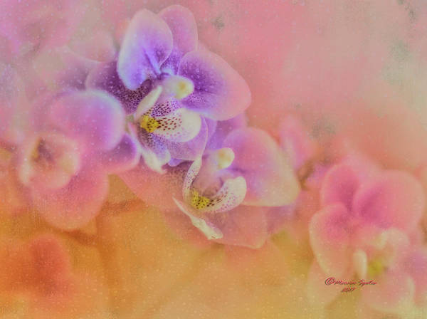 Smoke Fantasy Wall Art - Photograph - Spring Orchids by Marvin Spates