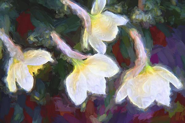 Photograph - Spring Quartet by Evie Carrier