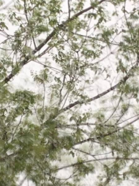 Photograph - Spring Rain by Itsonlythemoon
