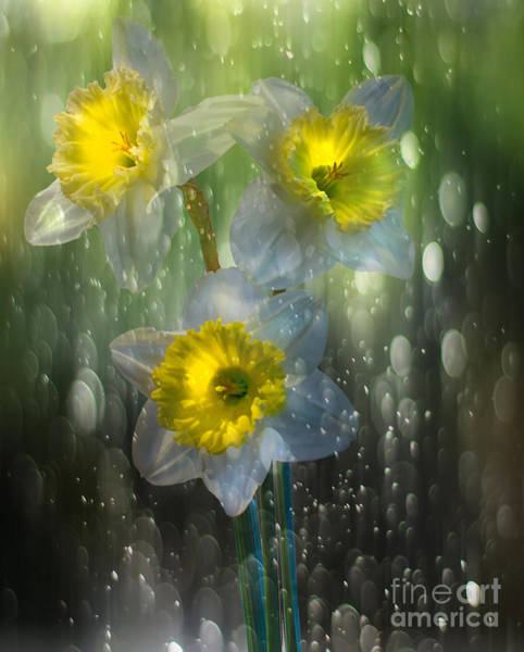 Yellow Trumpet Digital Art - Spring Rain by Nick Eagles