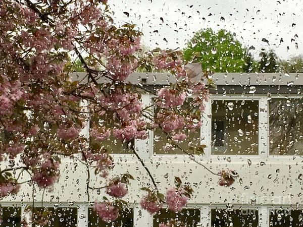 Photograph - Spring Rain Outside The Window And Sakura by Marina Usmanskaya