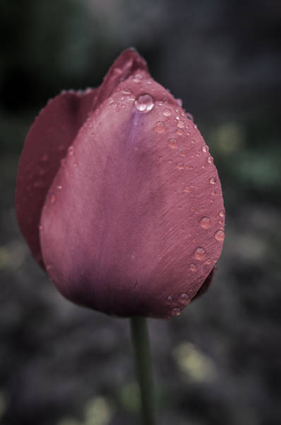 Photograph - Spring Rains In May by Miguel Winterpacht