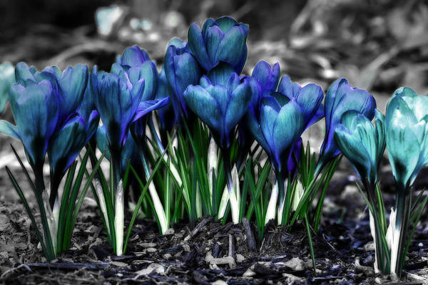 Photograph - Spring Rebirth by Shelley Neff