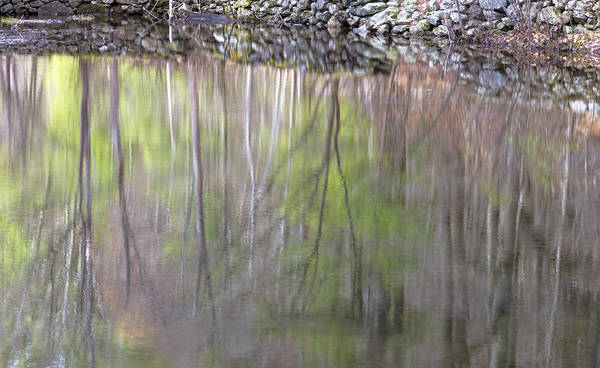 Photograph - Spring Reflections by Tom Singleton