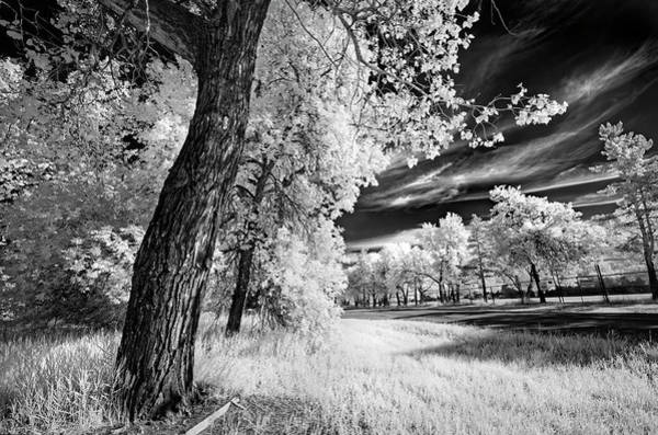 Elm Photograph - Spring Sky by Dan Jurak