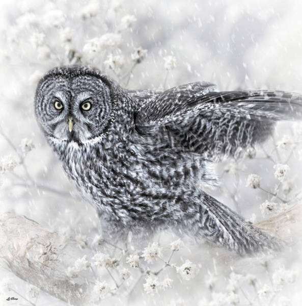 Wild Life Mixed Media - Spring Snow by G Berry