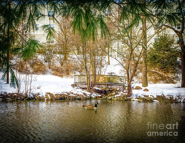 Photograph - Spring Snow On Woodbury Lake by Nick Zelinsky