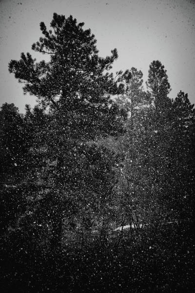 Photograph - Spring Snowstorm by Jason Coward