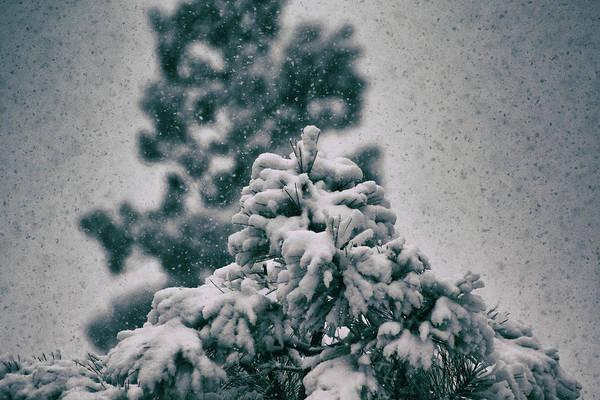 Spring Snowstorm On The Treetops Art Print