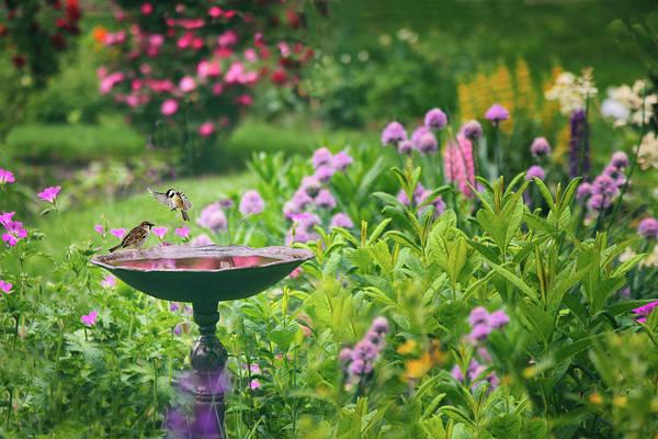 Photograph - Spring Splendor by Jessica Jenney