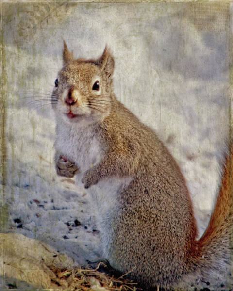 Spring Squirrel Art Print