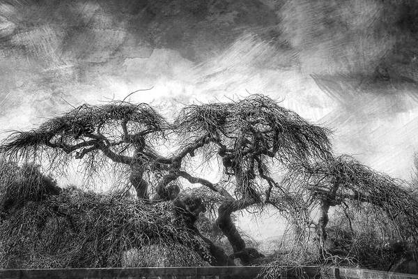 Filoli Photograph - Spring Storm by Mata Karen Serrano