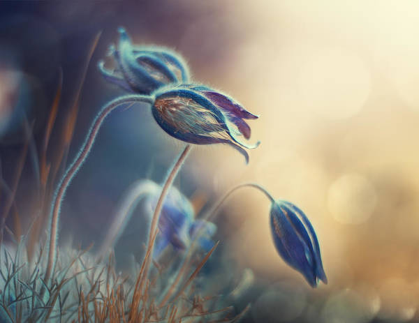 Wall Art - Photograph - Spring Sunset by Magda Bognar