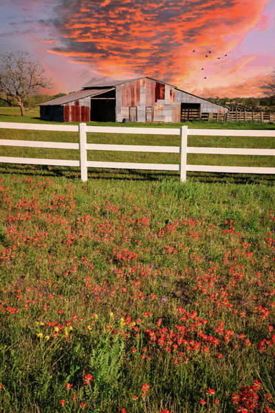 Photograph - Spring Sunset On The Farm by Lynn Bauer
