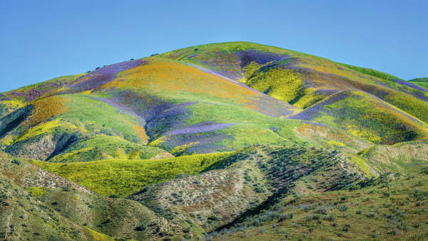 Wall Art - Photograph - Spring Superbloom by Joseph Smith