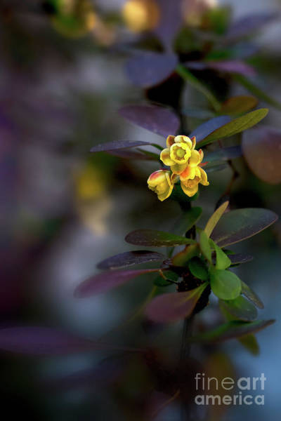 Photograph - Spring by Susan Warren