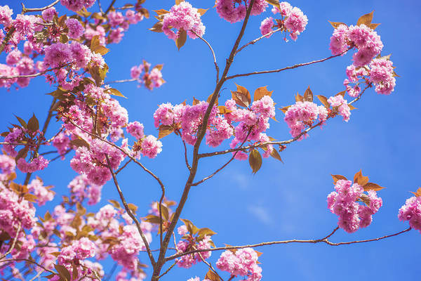 Wall Art - Photograph - Spring Time by Clem Onojeghuo