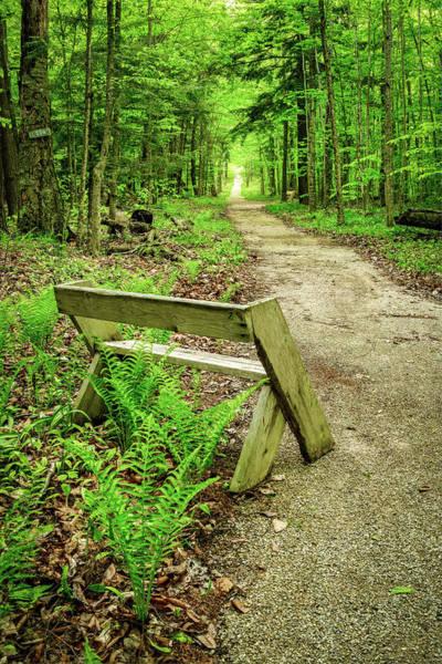 Photograph - Spring Trail by David Heilman