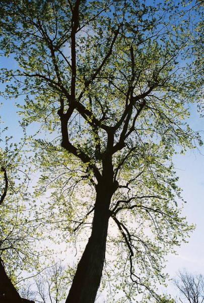 Spring Tree Art Print by Patrick Murphy