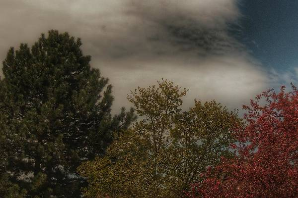 Photograph - 9005 - Spring Trees Against The Sky by Sheryl Sutter