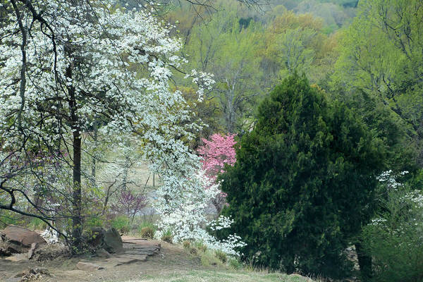 Honor Heights Park Photograph - Spring Trees At Honor Heights Park by Carolyn Fletcher