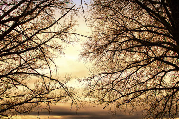 Wall Art - Photograph - Spring Trees At Sunset by Thomas Woolworth