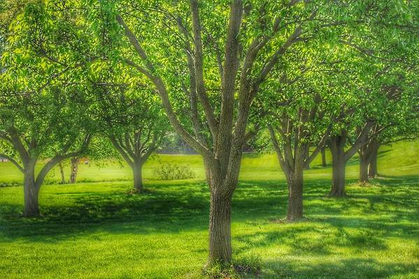 Photograph - 9007 - Spring Trees In Chartrues Green by Sheryl Sutter