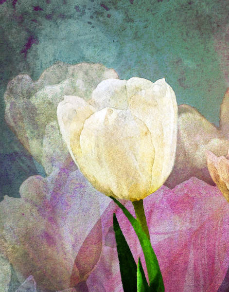 Moon Flower Photograph - Spring Tulips by Moon Stumpp