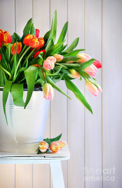 Wall Art - Photograph - Spring Tulips On An Old Bench by Sandra Cunningham