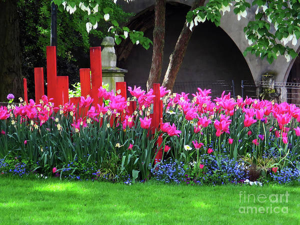 Photograph - Spring Tulips - Orleans by Rick Locke