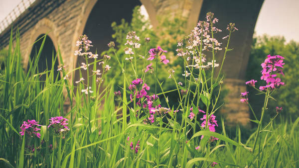 Photograph - Spring Under The Arches by Viviana  Nadowski